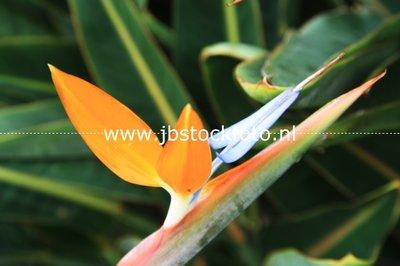 Subtropische bloemen